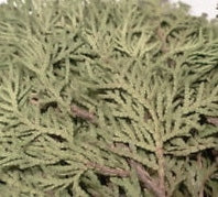 Flat Cedar Leaf (2 oz) Loose