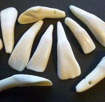 Buffalo Teeth - Drilled, White