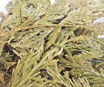 Red Cedar Leaf (dried 2 oz)