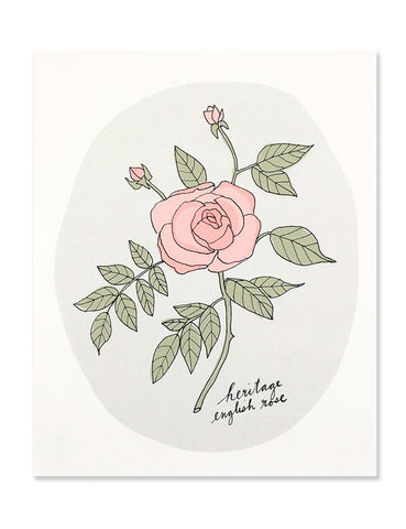 Neon red english rose on a pale gray circle background. Illustrated by Hartland Brooklyn.