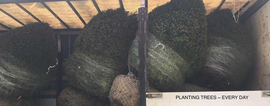 http://davidfairleygardens.co.uk/collections/hedges