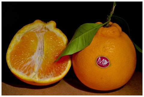 Giant Sicillian Tarocco Oranges