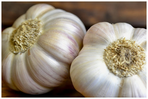 French Rose Garlic