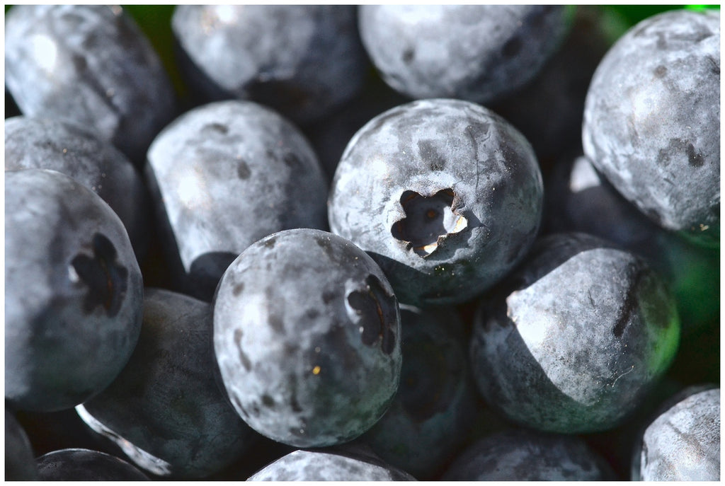 French Giant Blueberries