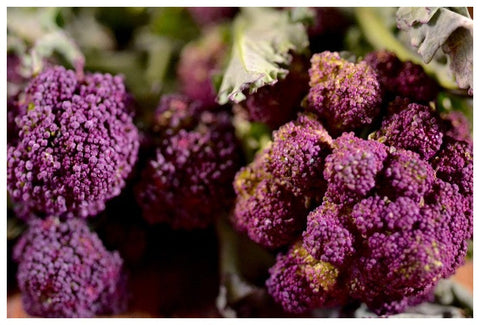 Organic Purple Sprouting Broccoli