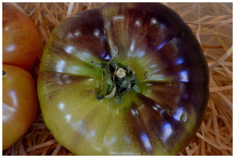 Blue Devil Tomatoes