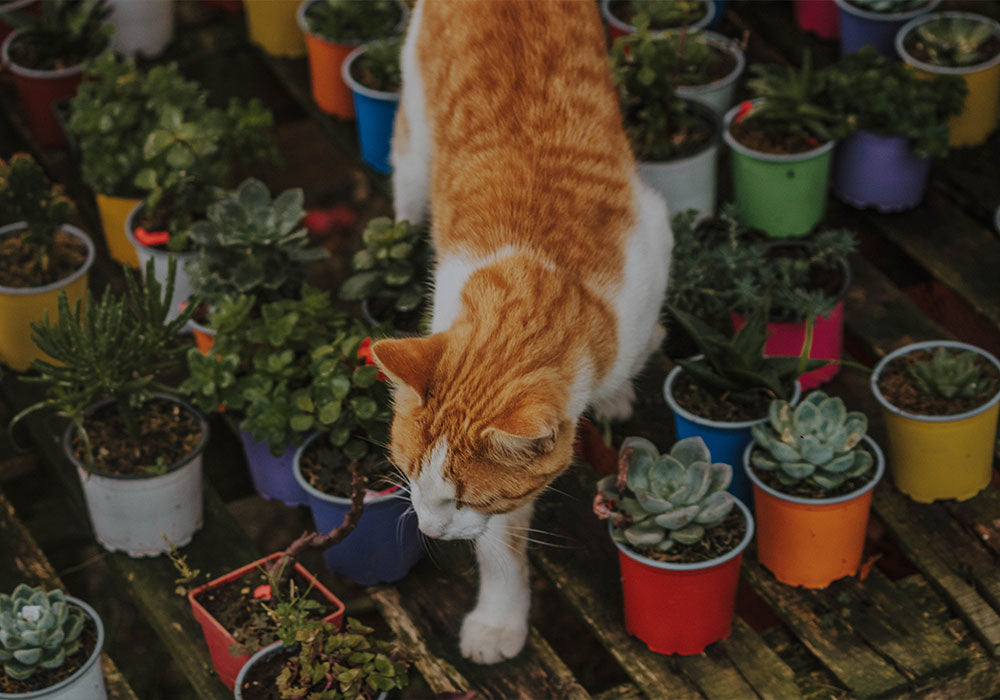 Plants that Cats Enjoy and are Safe to Eat