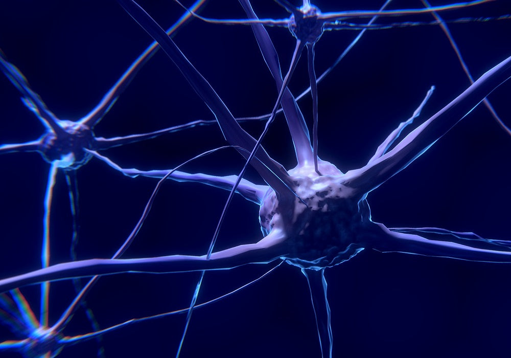 CBD and the Nervous System:  Actions and Interactions of Cannabidiol