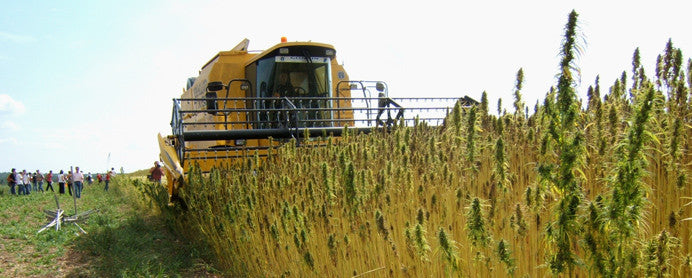 Five questions about Hemp in Italy