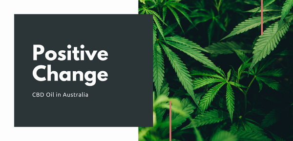 The cannabis plant: source for enecta's CBD oil, now available in Australia's Pharmacy shelves