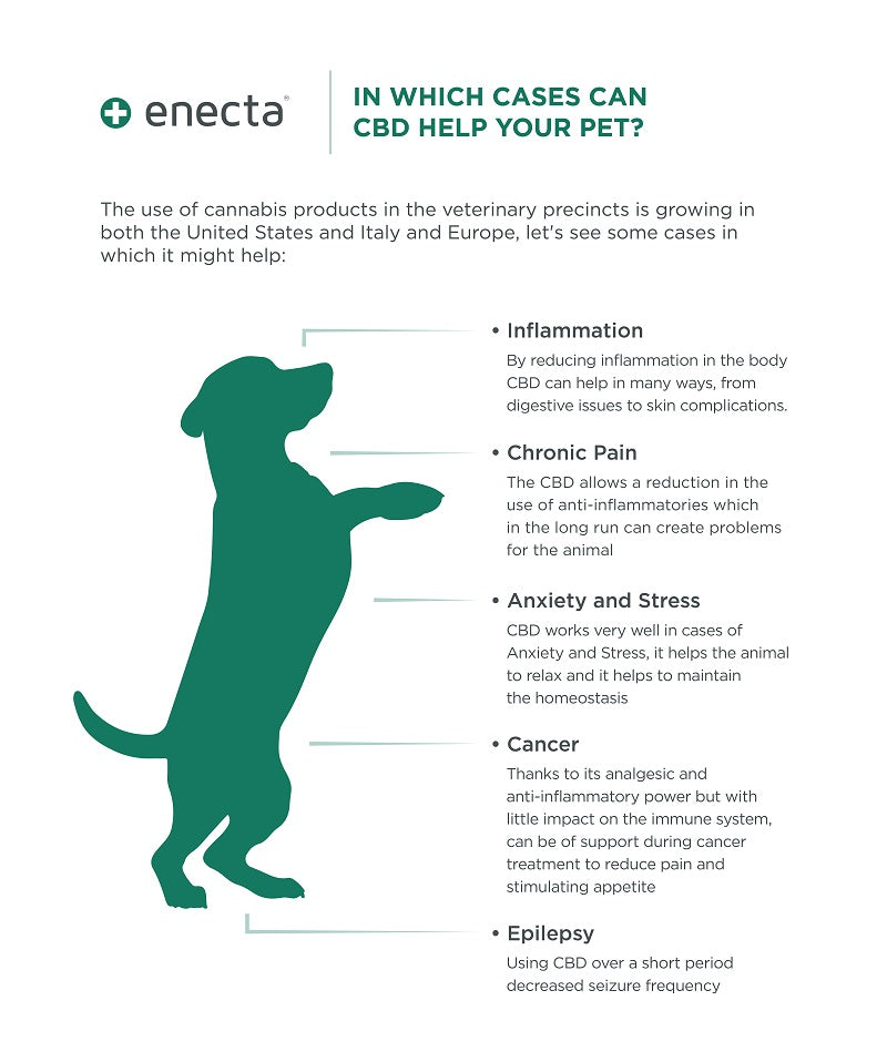 infographic about cbd benefits for pets