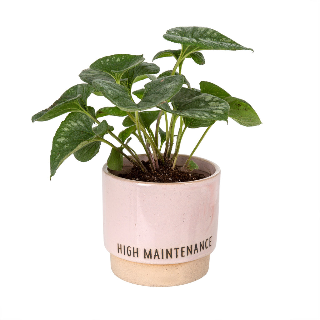 """High Maintenance"" Plant Pot"