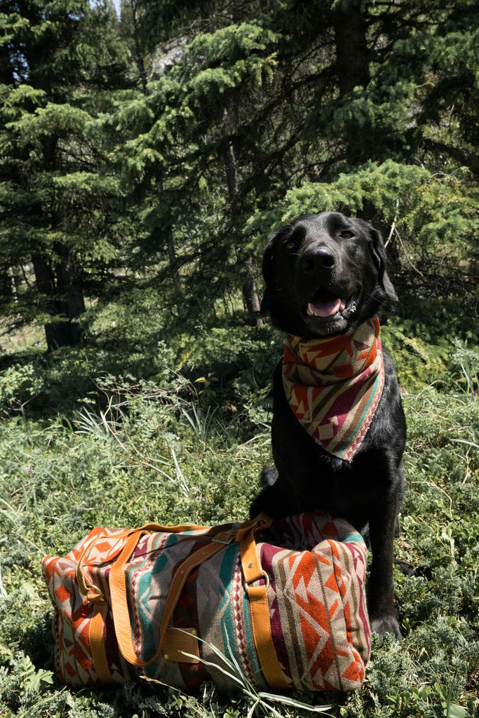 HeartPrint Dog Bandanas - MULTI