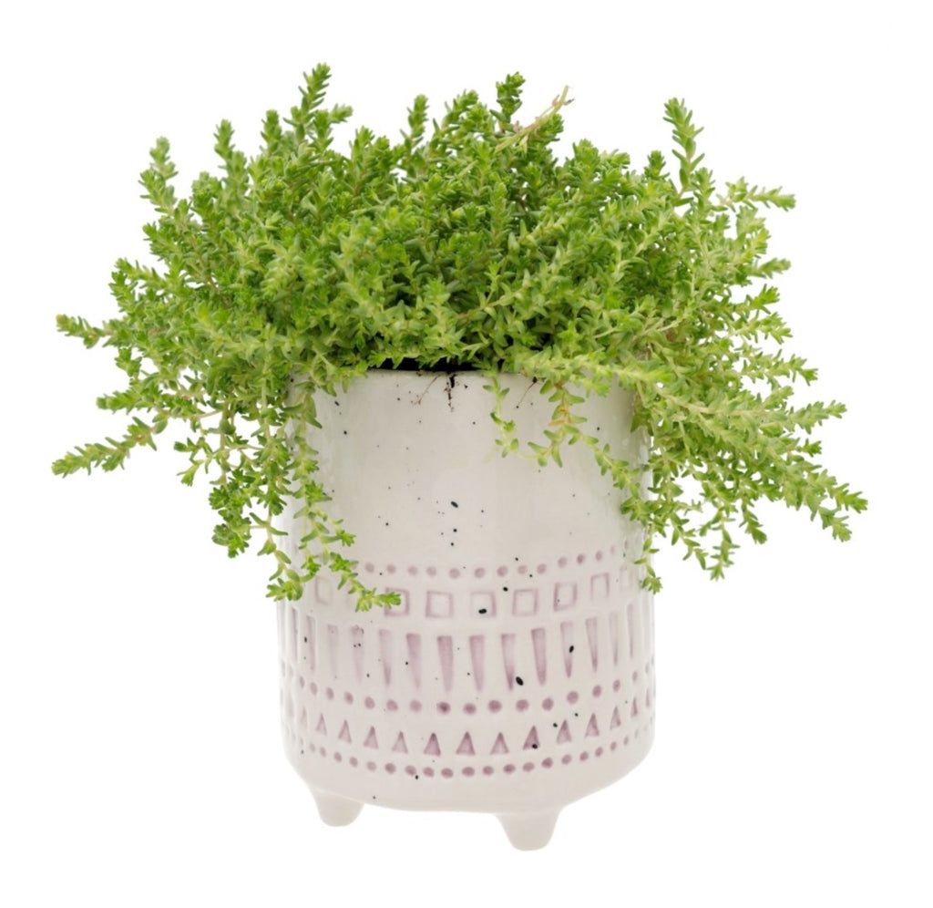 Florentine Plant Pot (2 colors)