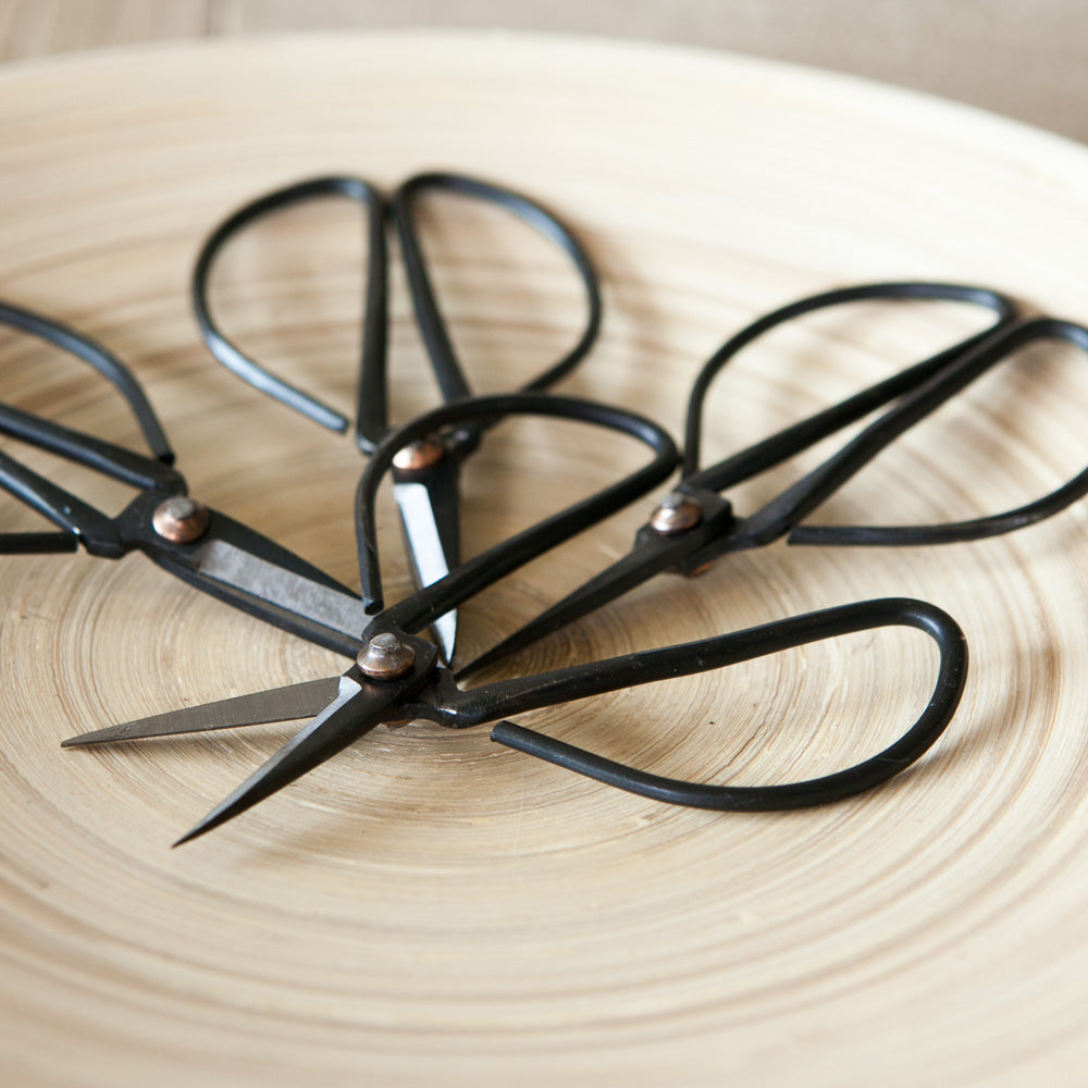 naturally HCW Scissors