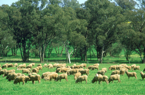 sustainable merino wool clothing