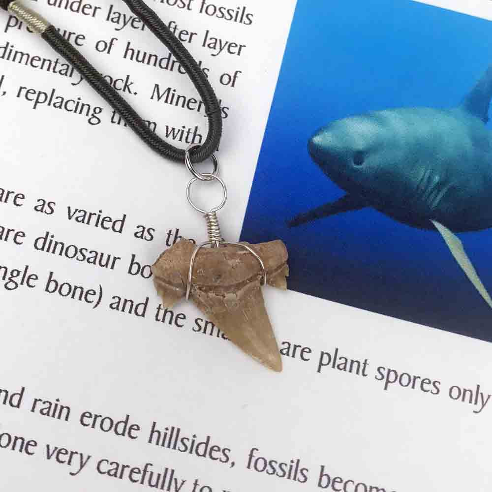 Fossilized Amber Shark Tooth on Adjustable Necklace 60 - 37.5 Million Years Old
