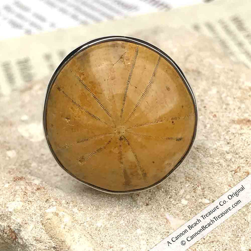 Sand Dollar Fossil Adjustable Ring in Sterling Silver by Charles Albert | Artifact #3152