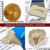 ssils to Study Specimen Collection - 6 Item Set