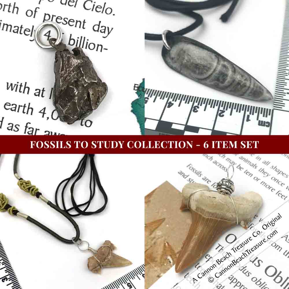 Fossils to Wear Fossil & Meteorite Jewelry Collection - 6 Item Set
