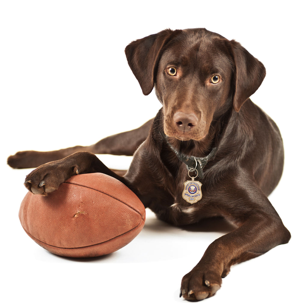 Chocolate Lab with Gold-Plated K-9 Honor Badge