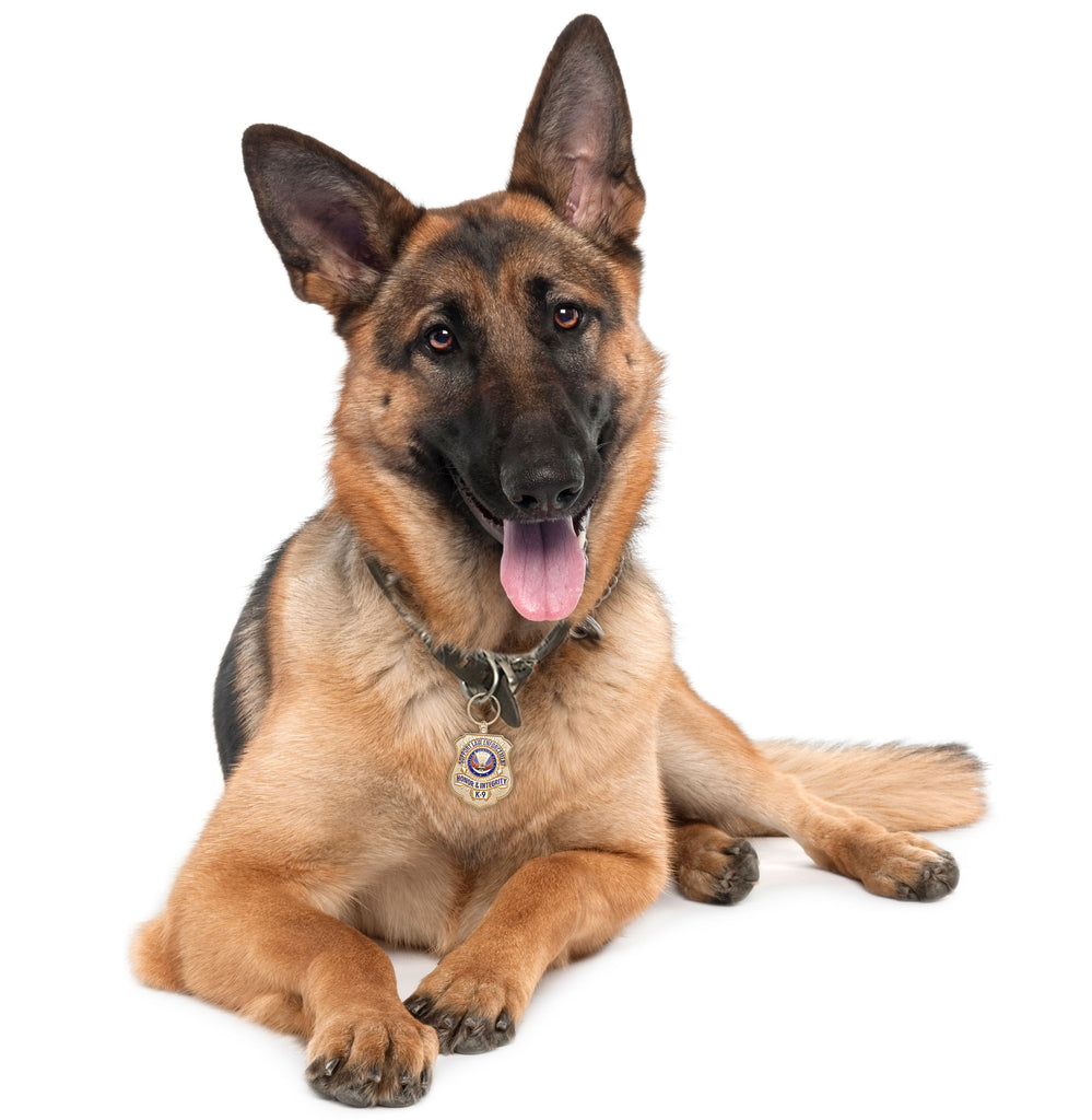 German Shepherd with Gold-Plated K-9 Honor Badge