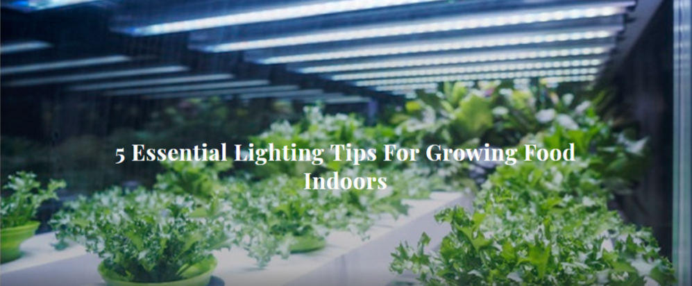 5 Essential Lighting Tips For Growing Food Indoors