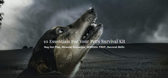 10 Essentials For Your Pet's Survival Kit Bug Out Plan - Disaster Scenarios, GENERAL PREP, Survival Skills