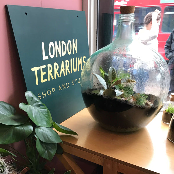 London Terrariums - Emma Sibley - Freedom To Exist - Luxury Unbranded Minimalist Watches