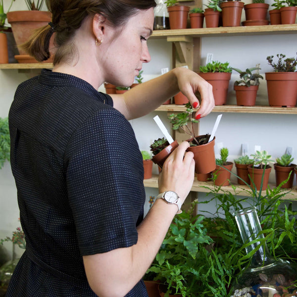 Emma Sibley - London Terrariums - New Cross - London