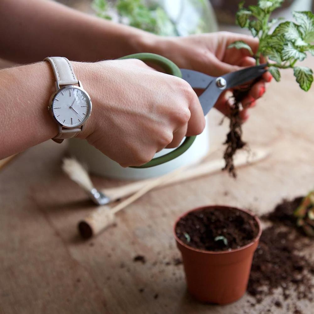 Emma Sibley | London Terrariums | Freedom To Exist Watches - Silver & Cream 30mm watch