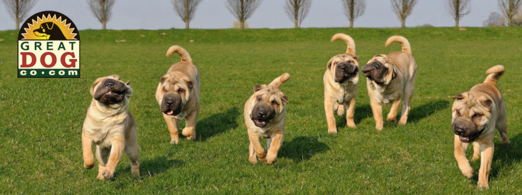 GREAT DOG CO. Shar Pei Dogs