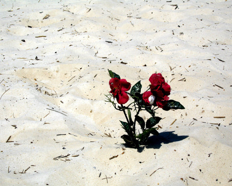 Flowers in the Sand Greeting Card (Love with Beauty Version)