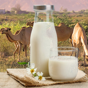 Camel milk kefir and why you should try it