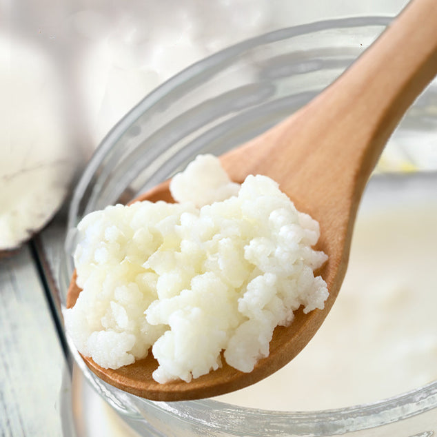 milk kefir grains on spoon