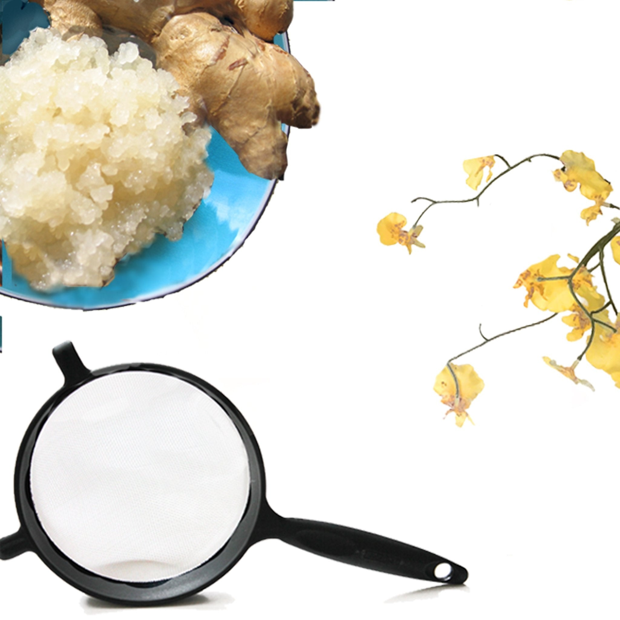 Live Ginger Beer Plant + Strainer set - Yemoos Nourishing Cultures
