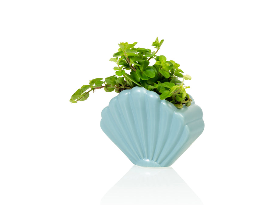 Atlantis Shell Planter Small Blue