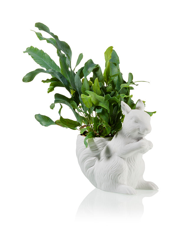City Dweller Squirrel Planter