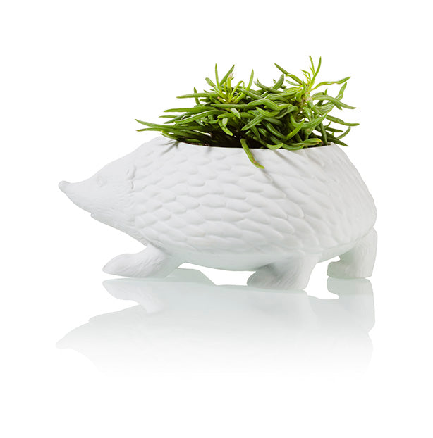 City Dweller Hedgehog Planter