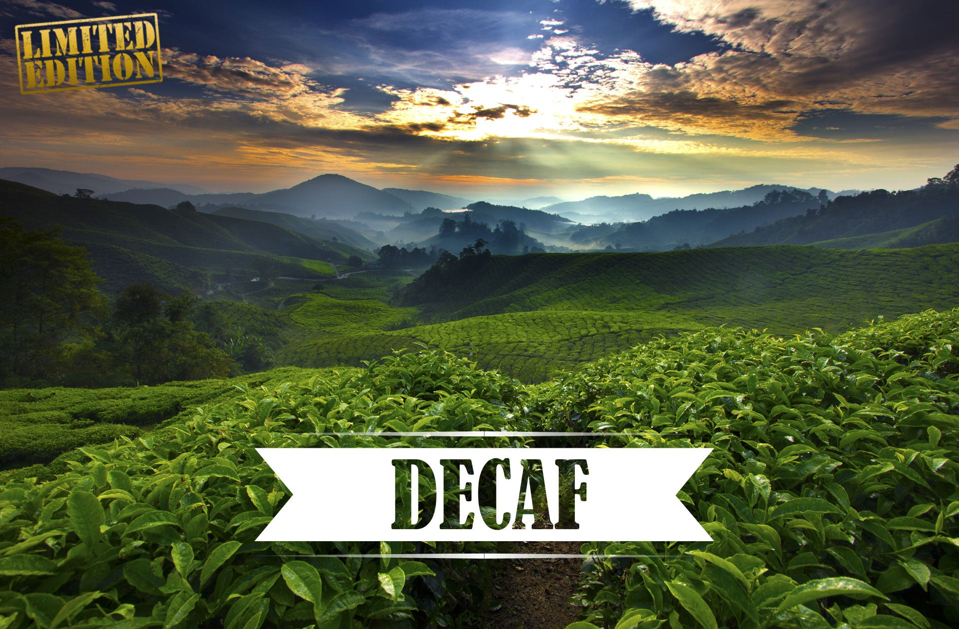 Decaf Limited Edition