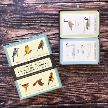 Backyard Birding Flashcards