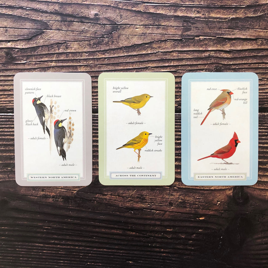 Backyard Birding Flashcards detail