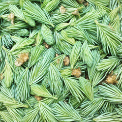 Traynor Vineyard Foraged Spruce Tips