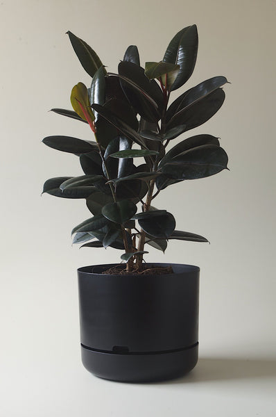 Let this Black 37.5cm Self Watering Pot do the hard work for you from Mr Kitly x Decor.
