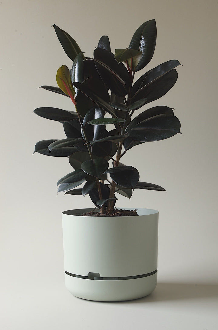 Let this Fog 37.5cm Self Watering Pot do the hard work for you from Mr Kitly x Decor.