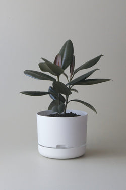Let this White 25cm Self Watering Pot do the hard work for you from Mr Kitly x Decor.