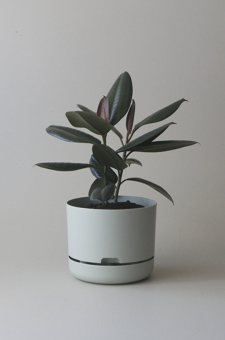 Let this Fog 25cm Self Watering Pot do the hard work for you from Mr Kitly x Decor.