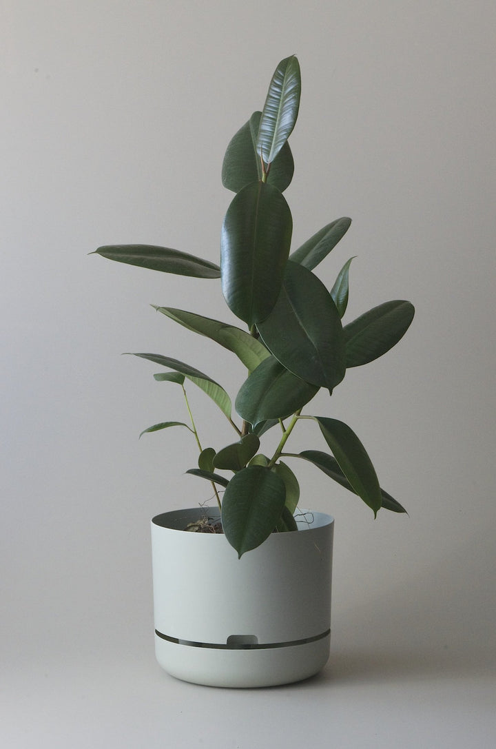 Let this Fog 30cm Self Watering Pot do the hard work for you from Mr Kitly x Decor.