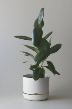 Let this White 30cm Self Watering Pot do the hard work for you from Mr Kitly x Decor.