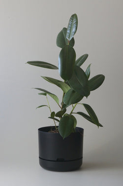 Let this Black 30cm Self Watering Pot do the hard work for you from Mr Kitly x Decor.